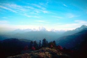 Manali with Himalayan Oak