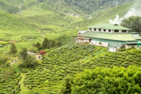 Darjeeling Package