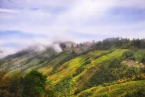 Charming Darjeeling